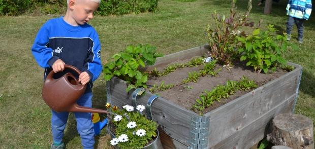 Barn i Herslev Børnehave vander planter