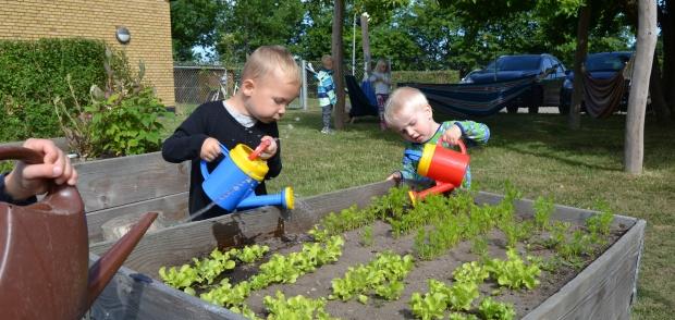 Børn i Herslev Børnehave vander planter