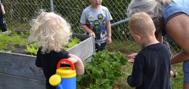 Børn i Herslev Børnehave smager jordbær