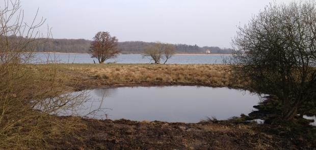 Fagerlien paddesø