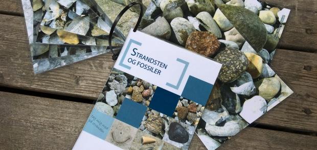 Strandsten og fossiler