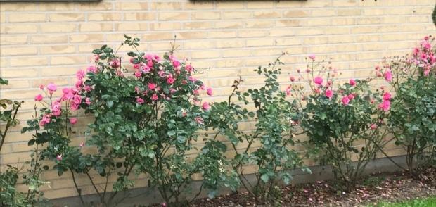 Billede af blomsterbed på NOVA foran huset