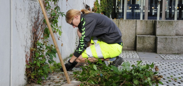 En gartner arbejder foran rådhuset