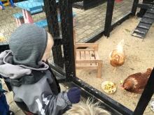 """Naturdagplejebørn siger """"Hej høne"""""""